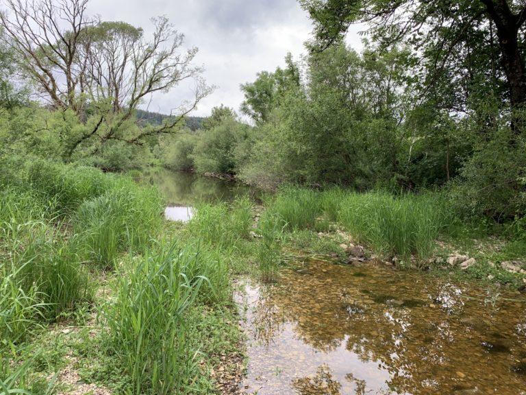 Die Donauversickerung bei Immendingen – Einmaliges Naturschauspiel im Schwarzwald