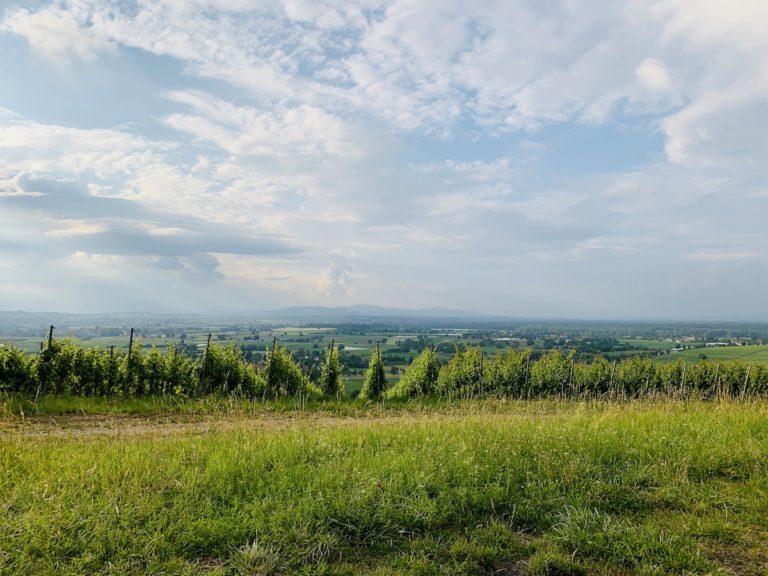 Stellplatz am Batzenberg – Gemütlichkeit im Weinberg