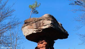 Read more about the article Teufelstisch – eine geologische Besonderheit